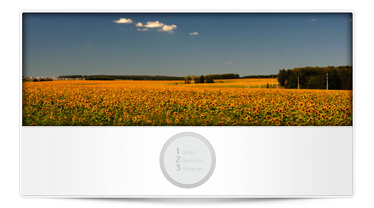 Consejos para novatos con la cámara del iPhone