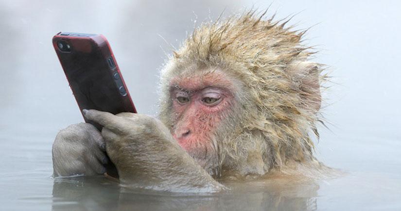 La increíble historia de la foto del mono que robó un iPhone…
