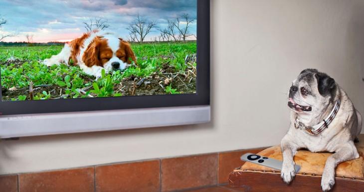 Apple patenta un mando a distancia que sabrá que miembro de la familia está viendo la TV