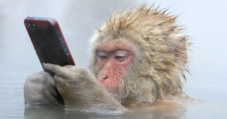 La pantalla del iPhone 7 podría funcionar incluso con dedos mojados