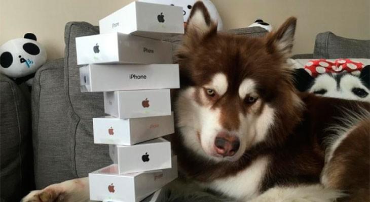 Un multimillonario chino le compra ocho iPhone 7 a su perro
