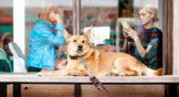 Cinco formas en que tu iPhone puede ayudar a tu perro